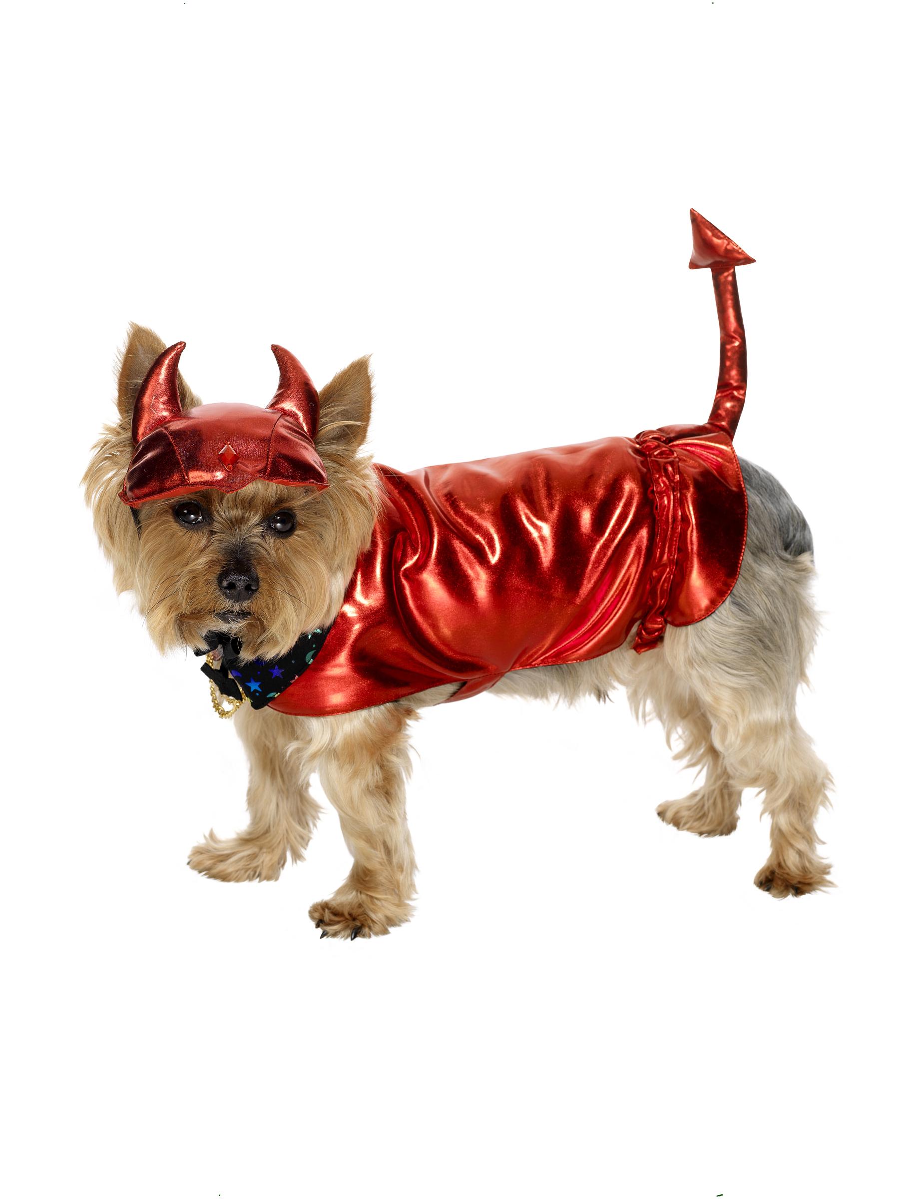 D guisement diable chien halloween - Deguisement halloween chien ...