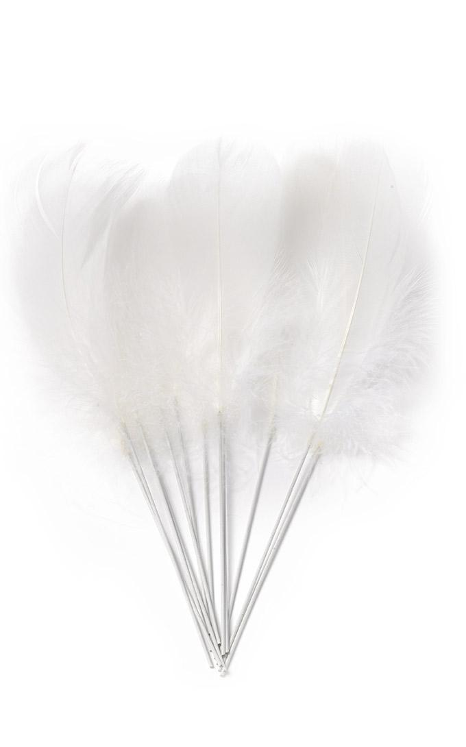 12 plumes blanches sur pic d coration anniversaire et. Black Bedroom Furniture Sets. Home Design Ideas